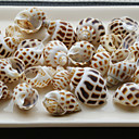 Beach Themed Screw Shells - Set of 4 Packs (80 pieces/Pack)